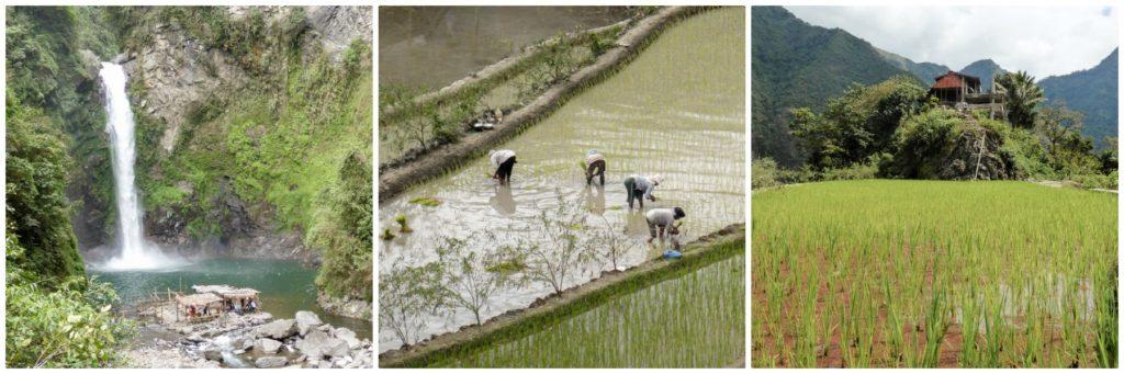 etre en plein milieu des rizière