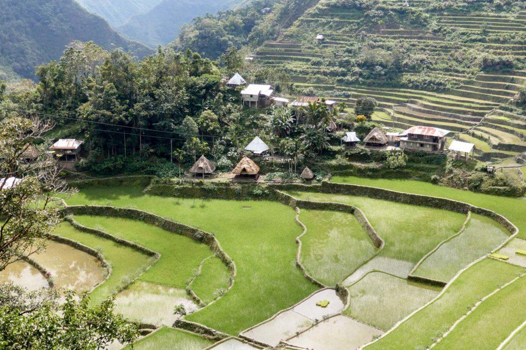 rizière de batad