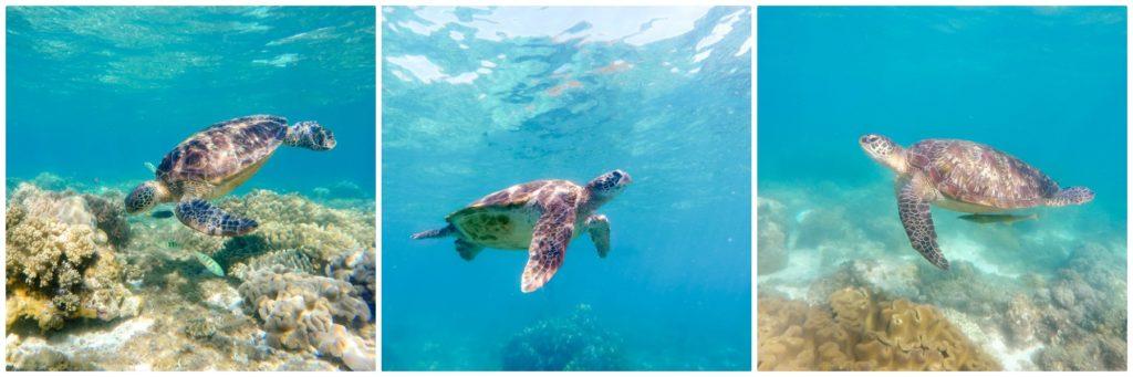 snorkeling au milieu des tortues