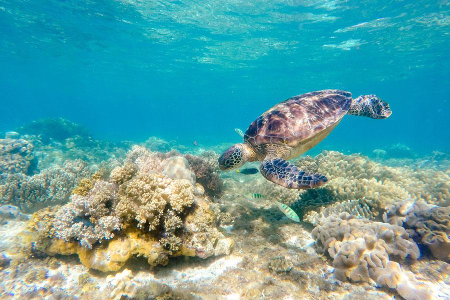 voir des tortue au philippine